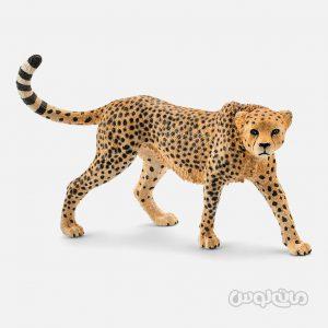 فیگور چیتا مادهسری حیات وحش سافاری اشلایش